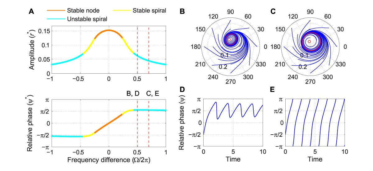Driven behavior of a supercritical Hopf oscillator under strong forcing.